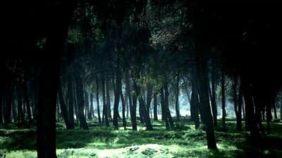 Dappled sunlight falling in woodland scene