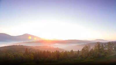 Early morning mist settled on a woodland landscape
