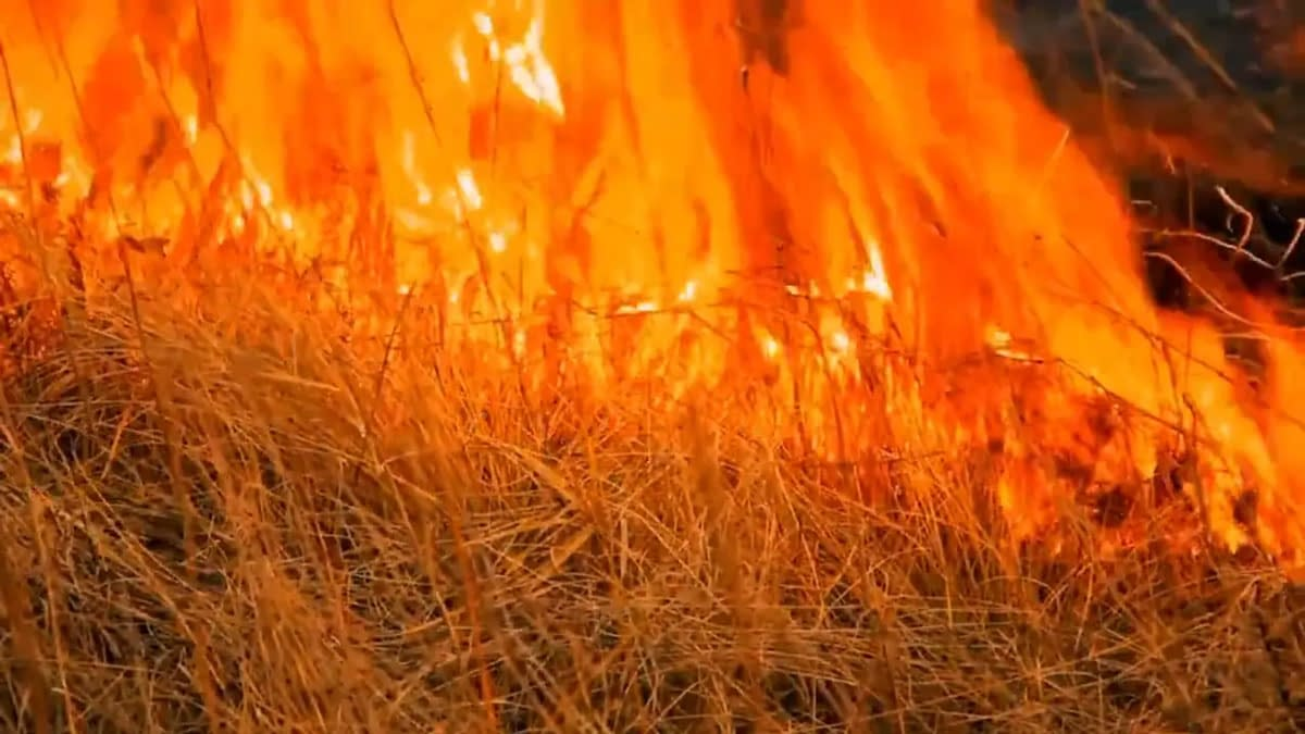 Close up of a field of tall grass on fire